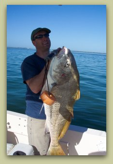 CATCHING BLACK DRUM ON FAT CAT FISHING CHARTERS IN ST PETE FL.