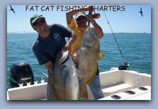 Florida Tarpon videos Black Drum caught on Fat Cat Fishing Charters with Captain Jay Masters