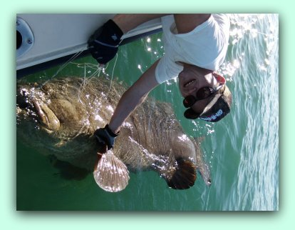 St Petersburg beaches JEW FISH AND GOLIATH GROUPER FISHINGB CHARTERS.