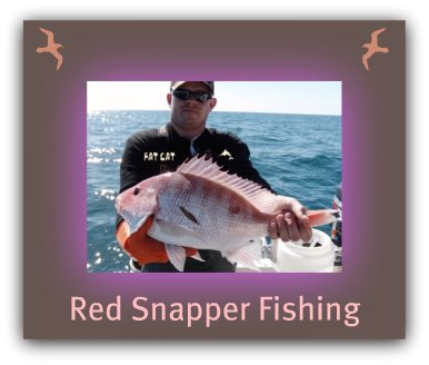St.Petersburg Beach Fishing Charters | Fishing Charters St.Petersburg Fl | Fat Cat Pictures
