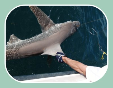 st pete shark fishing charters