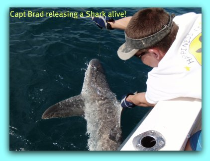 Tampa Bay fishing charters Whant to catch sharks? No problem on Fat Cat Fishing Charters.
