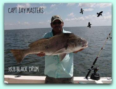 Tarpon regulations Black Drum Fish caught on fat cat fishing charters by Capt Jay Masters
